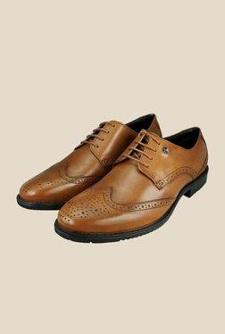 Arrow Tan Leather Brogue Shoes