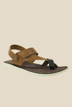 Get Glamr Brad Brown & Black Back Strap Sandals