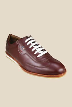 Arrow Sam Burgundy Casual Shoes