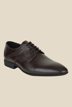 Ziraffe Bogota Dark Brown Derby Shoes